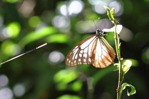 vlinder foto