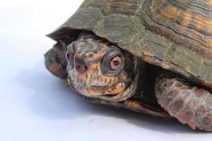 zonnige dagschildpad