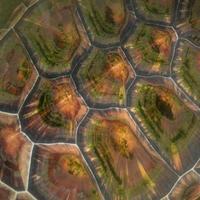 textuur van schildpad schild