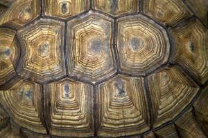 achterkant van de schildpad foto
