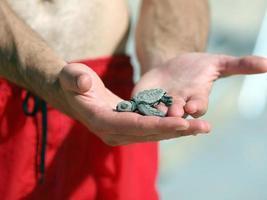 pasgeboren schildpad