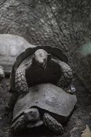 schildpadden foto