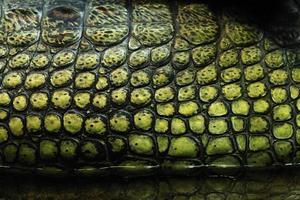 huidtextuur. gharial (gavialis gangeticus) foto