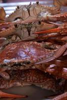 gekookte krabben, klaar om te koken voor Thaise krabcurry