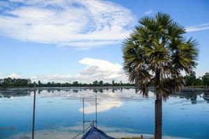 blauwe lucht en meer, een palmboom staat naast foto