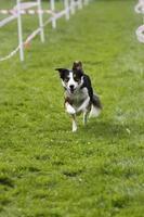lopende hond in de sport foto