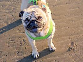 hond op het strand foto