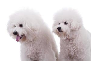 nieuwsgierige honden foto