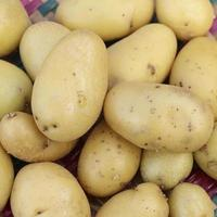 kleine aardappelen foto