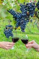 twee handen roosteren met rode wijn in de buurt van blauwe druiven