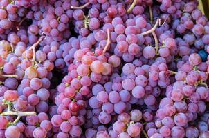 rode druiventrossen op de markt foto