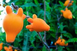 aubergine hoorn foto