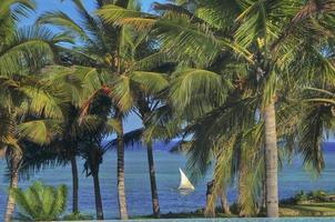paisaje palmeras foto