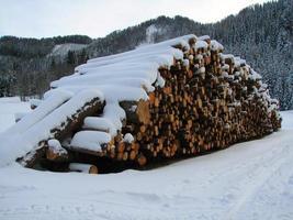 besneeuwde stapel hout foto
