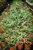 groen huis orchideebloem kwekerij foto