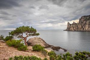 zeegezicht met rotsen en boom