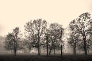 bomen foto