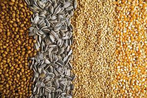 landbouwgranen foto