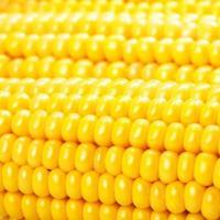 maïs foto