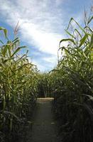 traject door het doolhof van maïs foto