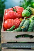geoogste tomaten en komkommers in kas foto