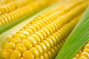 maïs macro