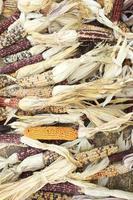 gedroogde maïs foto