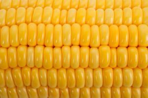 maïs achtergrond