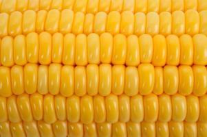 maïs achtergrond foto