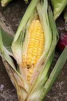 beschadigde maïs door insecten foto