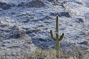 sneeuw in het nationaal park saguaro foto