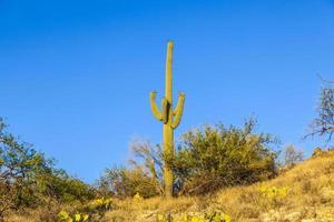 groene cactus in de woestijn foto