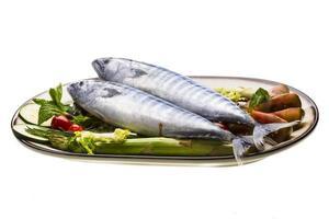 verse Atlantische makreel foto