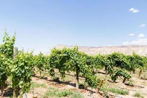 wijngaard foto