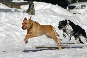 hondjes gaan snel foto