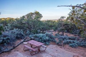 een oude knoestige jeneverbessenboom in de buurt van Navajo Monument Park Utah foto