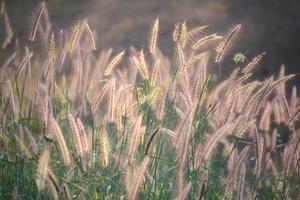 bloemen gras foto