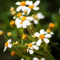 gras bloemen foto