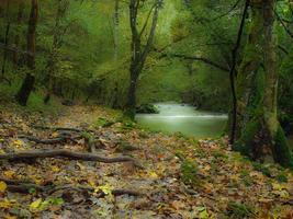 herfst rivier foto