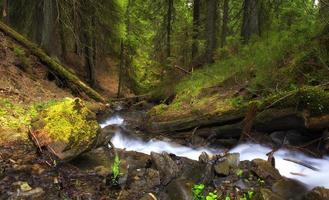 rivier in het bos foto