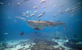 onderwater wonderland foto