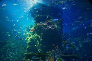 grootste aquarium ter wereld foto
