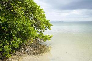 mangroven foto