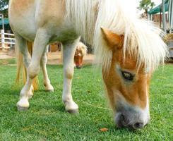 paard eet foto