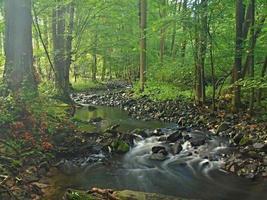 oever van de rivier onder bomen op bergrivier, mossy keien foto