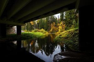 rivier in herfst bos.