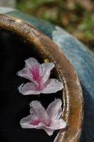 twee bloemen op het water foto
