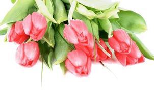 lente tulpen foto