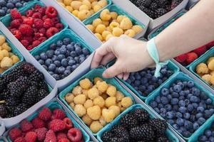 biologische rode en gouden frambozen, bosbessen en bramen, boerenmarkt foto