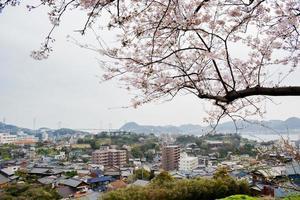 sakura en shimonoseki foto